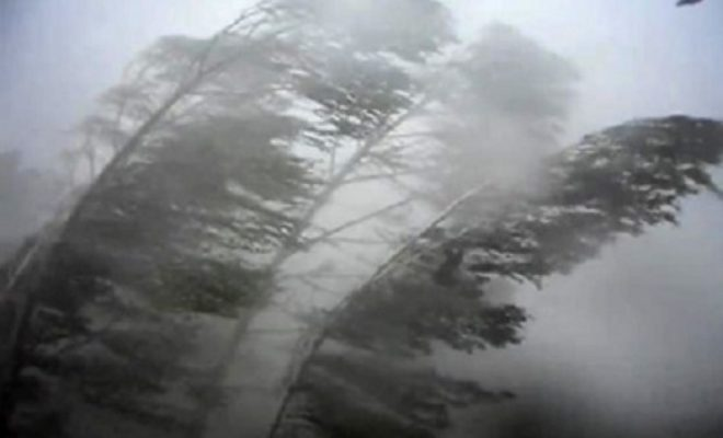 МЧС предупредило об усилении ветра