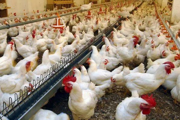 Иранская компания построит сельхозкомплекс вАстраханской области