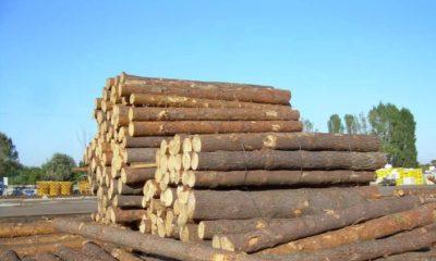 Рабочего подозревают в краже древесины у предпринимателя