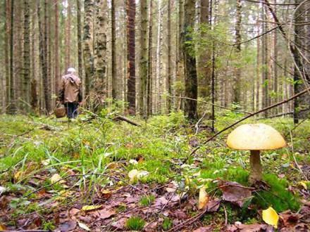 Сотрудник калужской Росгвардии спас заблудившегося грибника