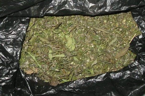 За хранение марихуаны 20-летнему парню грозит 10 лет