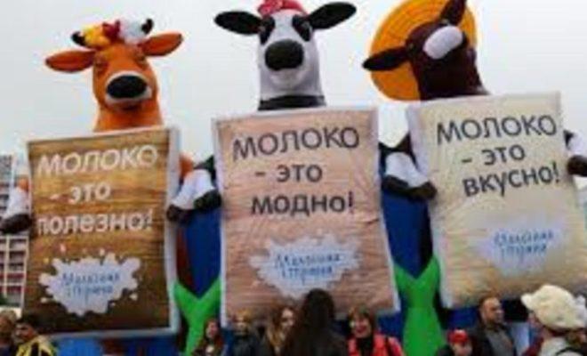 В Калуге пройдет первый Фестиваль молока