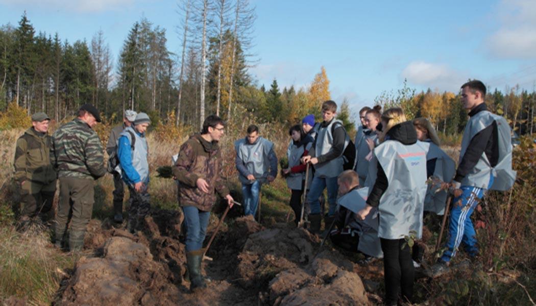 Активисты ОНФ высадили саженцы ели в Кировском районе