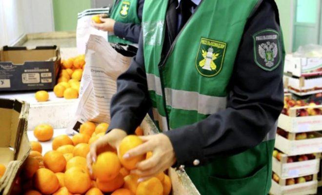 26 тонн мяса и рыбы без документов не пустили в Калужскую область