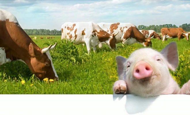 Глава сельского поселения получила выговор за продажу скота