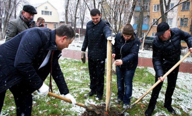 Невзирая на снег, депутаты Заксобрания посадили клены