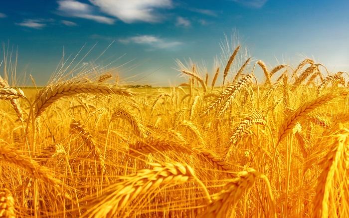 Российская Федерация иТурция должны отыскать компромиссы ввопросах сельхозпоставок— Ткачев
