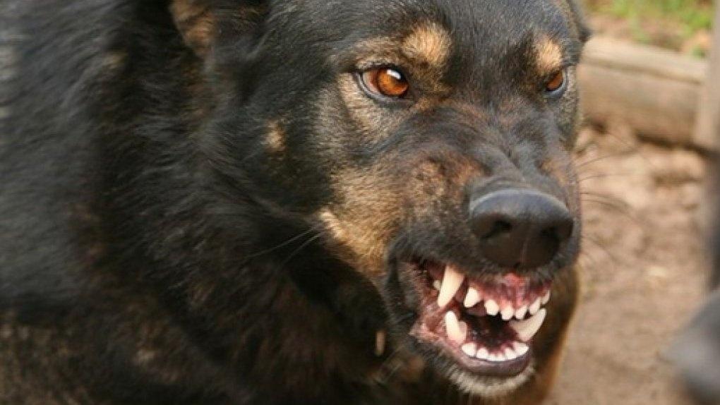 НаДону стая бродячих собак атаковала троих молодых людей