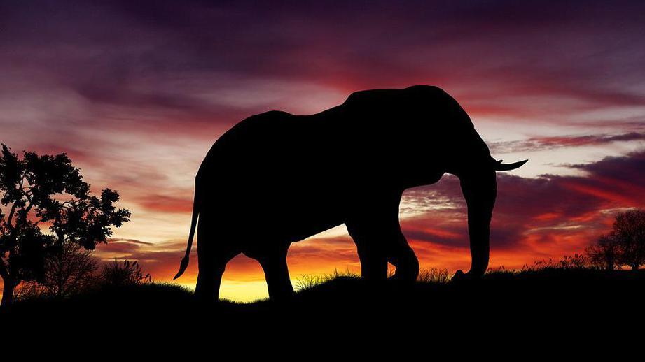 ВЗамбии слон убил 2-х туристов изЕвропы