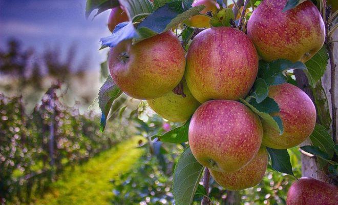 В Калужской области нацелены на развитие садоводства
