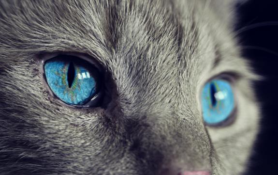 Кошки спасают детей отастмы— Ученые