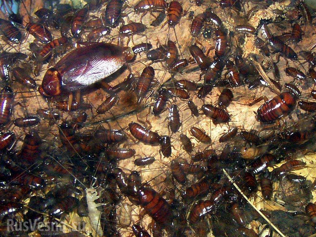Белый дом атакуют насекомые— 4 нашествия тараканов