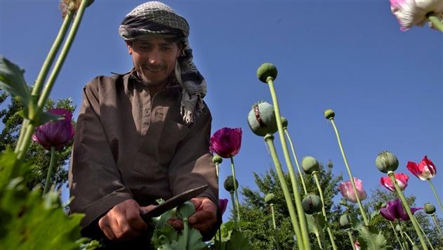 ВАфганистане устранили одного излидеров «Талибана»