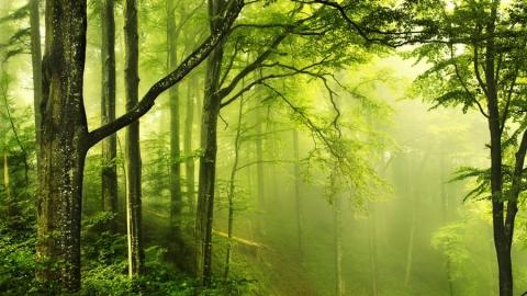 Генеральная прокуратура: Влесу уозера Сазанка запретят вырубку деревьев