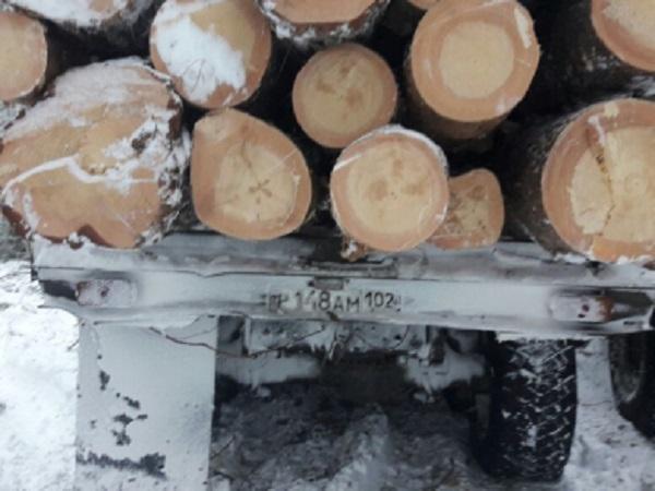 ВБашкирии нелегально вырубили 36 кубометров сосновой древесины