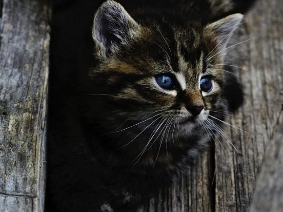 Гражданин Петербурга спас котят от погибели, прыгнув заними вводу