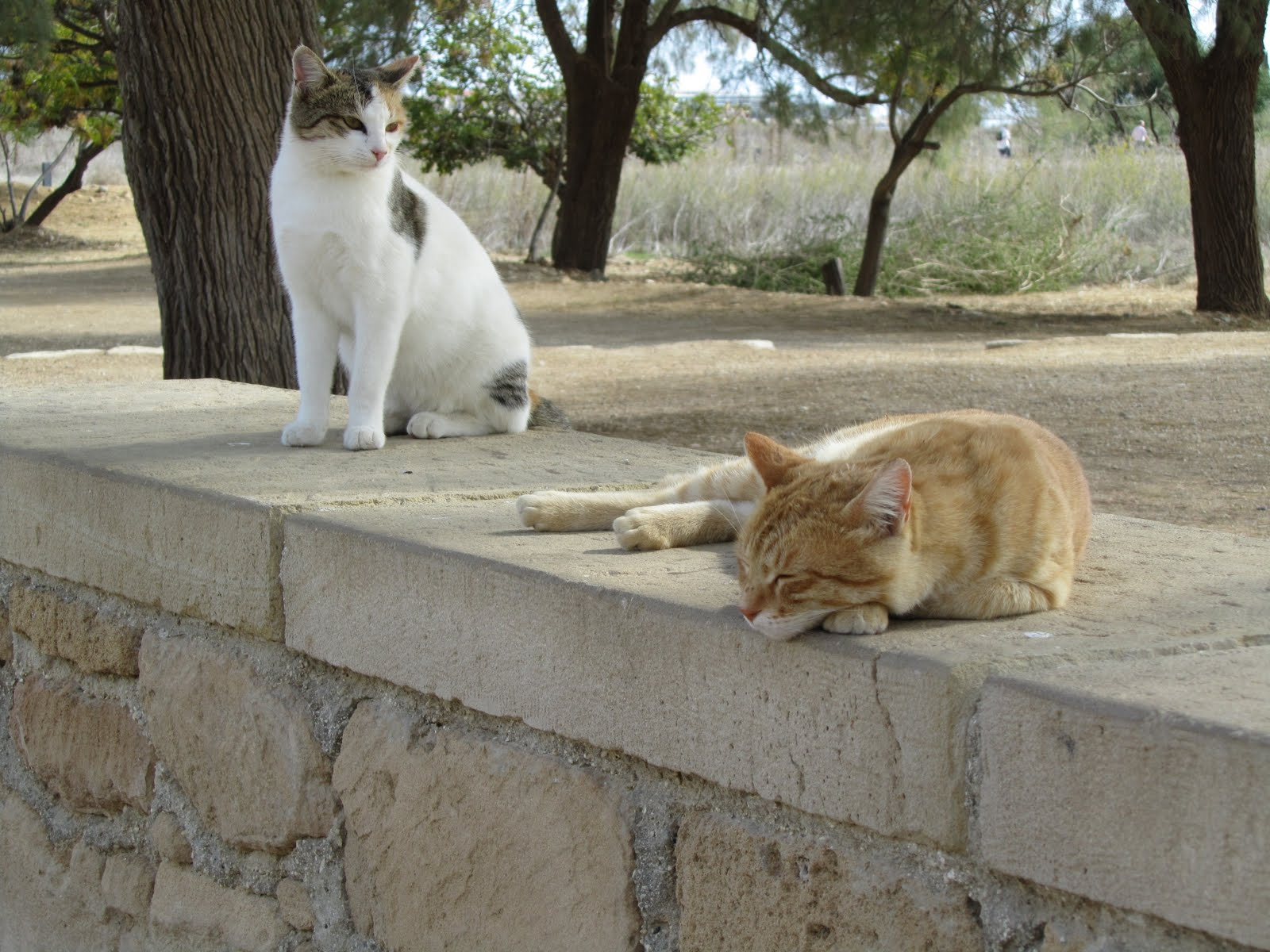 Кипр вмежсезонье: нюансы направления