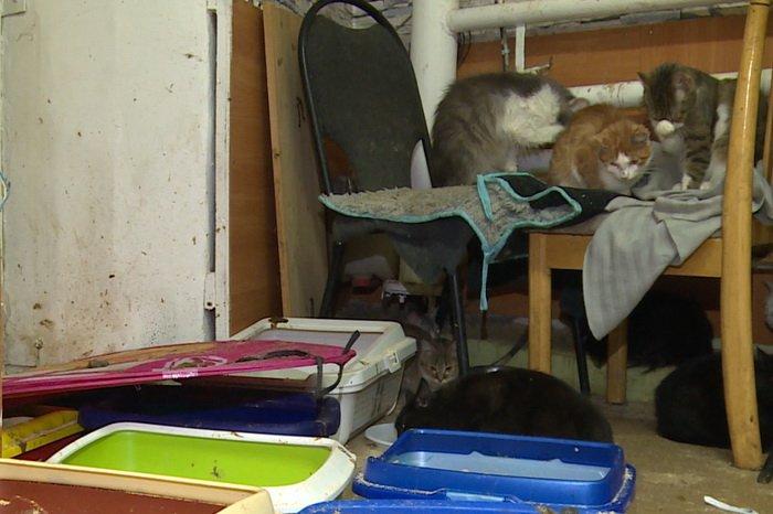ВБалашихе хозяйка гостиницы для кошек морила голодом чужих питомцев