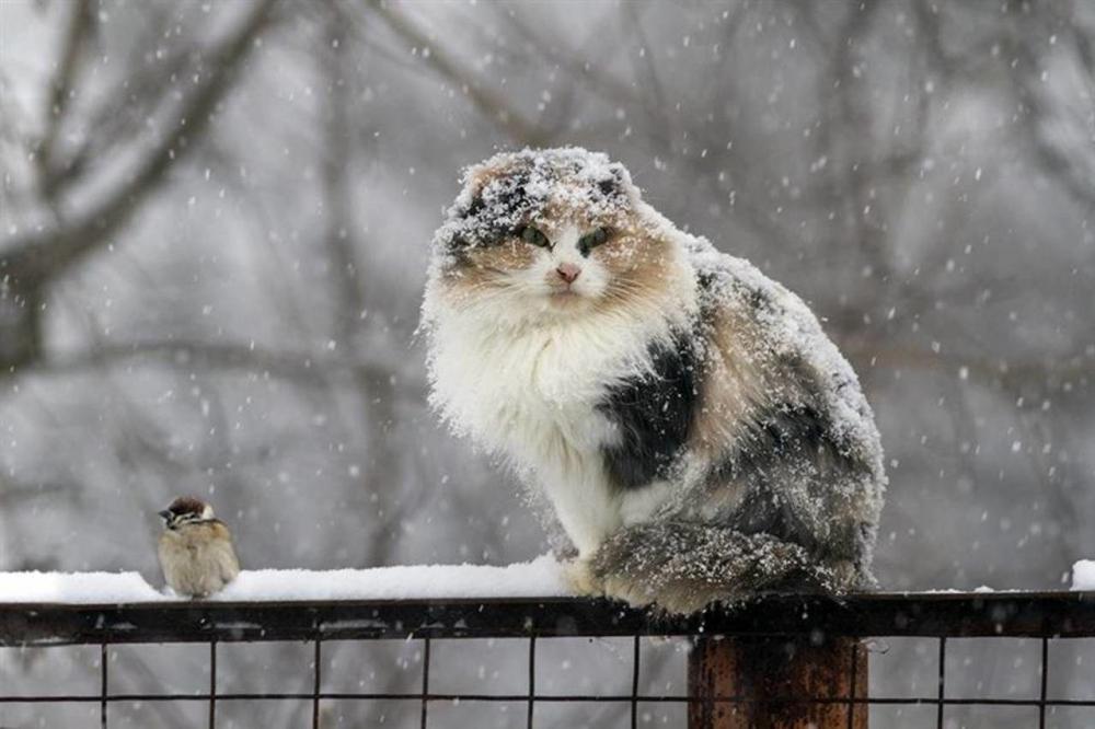 В Беларуссии 10декабря объявлен оранжевый уровень опасности из-за мокрого снега