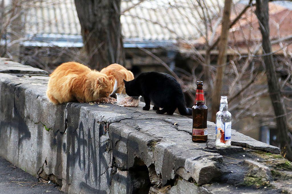 ВОдессе принято решение овключение котов вэкосистему города