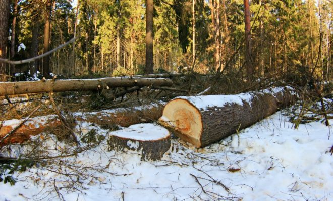 В национальном парке «Угра» незаконно рубили лес