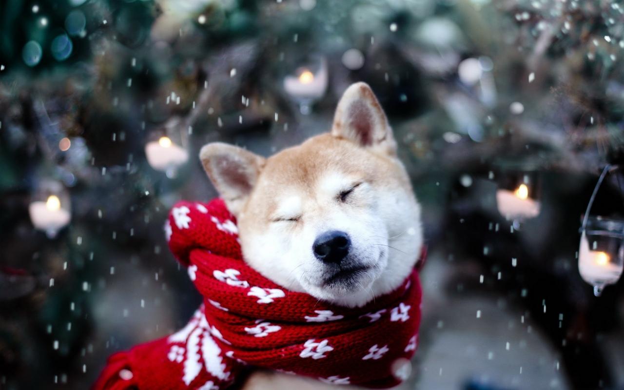 ВГод Собаки мир открыт для путешествий